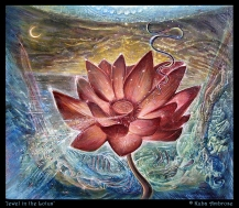 Jewel in the Lotus by Kuba Ambrose
